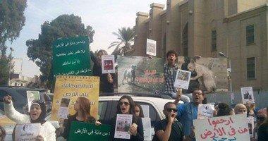 """أعضاء الأهلى يُنظمون """"وقفة احتجاجية"""" للتنديد بمذبحة القطط"""