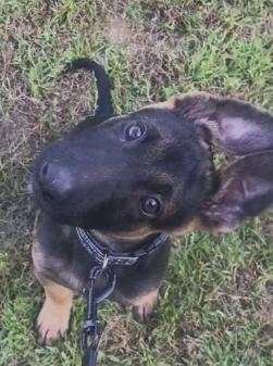 بالفيديو… 3 ملايين مشاهدة لرد فعل كلب يسمع صفير