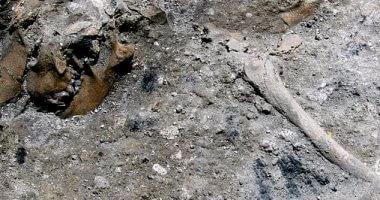 اكتشاف حفرية لنوع من الزواحف الطائرة بأمريكا
