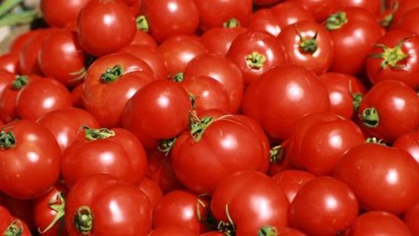 الزراعة: انخفاض أسعار الطماطم خلال الفترة القادمة