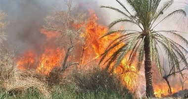 حريق هائل داخل مزارع نخيل بقرية الشيخ والى فى الداخلة بالوادى الجديد