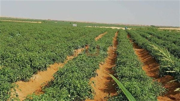 صحراء أبو منقار بالوادي الجديد تتزين باللون الأخضر..تخصيص 63 ألف فدان للمستثمرين