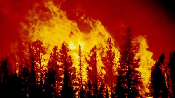 السلطات النيوزيلندية تجلي 700 شخص من بلدة جنوبي البلاد بسبب حريق غابات