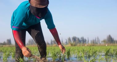 وزير الرى: إعلان حالة الطوارئ استعدادا لموسم الزراعات الصيفية ومحصول الأرز
