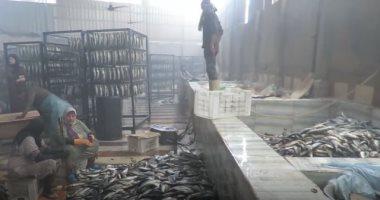 """قبل شم النسيم.. ضبط 104 أطنان أسماك مملحة فاسدة بالغربية """"فيديو"""""""