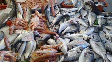 البلطي بـ 44 جنيها.. أسعار الأسماك بسوق العبور اليوم 20 مايو 2019