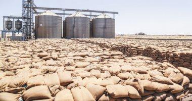 الزراعة: المساحة الجديدة المنزرعة ستساعد علي زيادة محصول القمح لأكثر من 9 ملايين طن