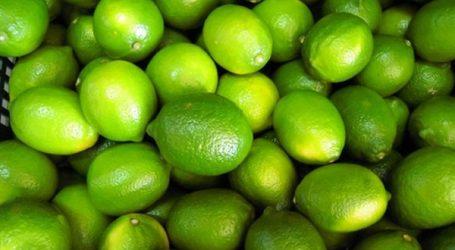 أمين عام الفلاحين: الإخوان وراء جنون أسعار الليمون
