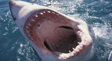 آكلة لحوم بشر.. سمكة قرش تفزع السياح وتنقض على الصيادين