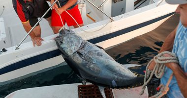 دار الإفتاء عن صيد الأسماك بالصعق الكهربائى: حرام شرعًا