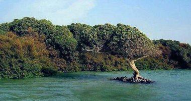 تثبيت رقائق إلكترونية فى الأشجار بالبرتغال للاعتناء بها