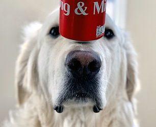 بالصور…موهبة كلب في حفظ توازن الأشياء أعلى أنفه