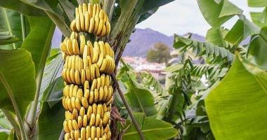 مشكلة جديدة يطرحها تغير المناخ على المحاصيل .. تعرف على التفاصيل