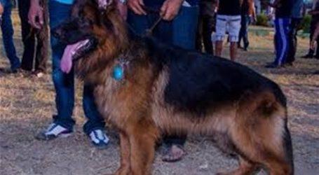 مصادرة كلبين بدون ترخيص في باب الشعرية