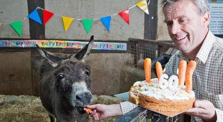 أكبر حمار في العالم يحتفل بعيد ميلاده الـ60 (صور وفيديو)