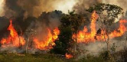 حرائق الغابات تلتهم أستراليا