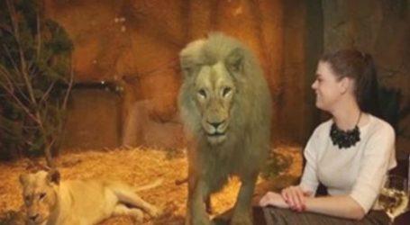 فندق غريب في بريطانيا لقضاء الوقت مع الحيوانات المفترسة