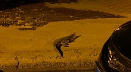 هند صاحبة فيديو التمساح المتجول في أكتوبر تكشف كواليس الواقعه