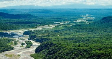 باحثون يحذرون: غابات الأمازون معرضة للدمار خلال 50 عاما