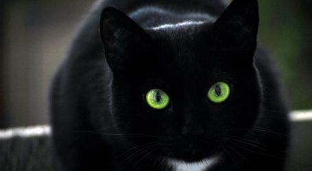 """طهي القطط السوداء في فيتنام للعلاج من """"كورونا"""""""