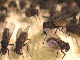 مدير معهد بحوث الحشرات :حتى الآن لم يتم إثبات نقل الحشرات عدوى فيروس كورونا