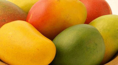 استشاري تغذية: المانجو سلاح مذهل لتقوية المناعة ومحاربة «كورونا»