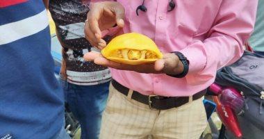 العثور على سلحفاة صفراء نادرة فى الهند للمرة الثانية خلال عام