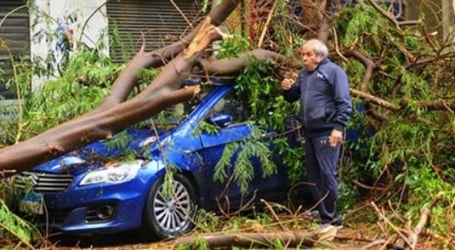 سقوط شجرة بأحد شوارع المهندسين بسبب سوء الأحوال الجوية وشدة الأمطار