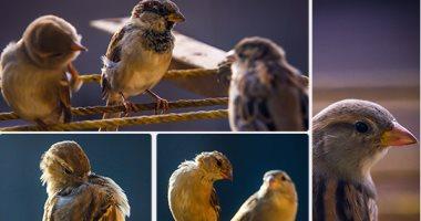 دراسة أمريكية جديدة تكشف تأثير أصوات الطيور على مزاج الإنسان