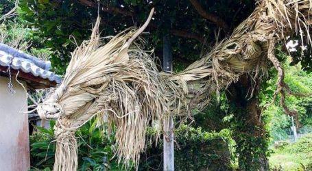 تنين عملاق من الخشب وأغصان النخيل في اليابان   صور