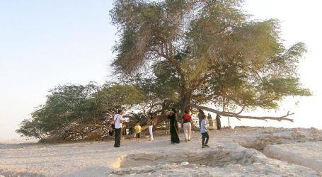 """لغز """"شجرة الحياة"""".. صمدت أكثر من قرن فى قلب الصحراء"""