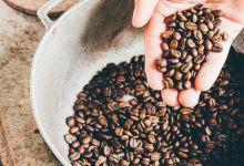 القهوة العناية بالشعر